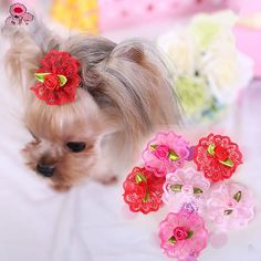 Cat / Dog Hair Bow / Hair Accessories Red / Pink / Rose Dog Clothes Spring/Fall Wedding / Cosplay - USD $3.99 ! HOT Product! A hot product at an incredible low price is now on sale! Come check it out along with other items like this. Get great discounts, earn Rewards and much more each time you shop with us!