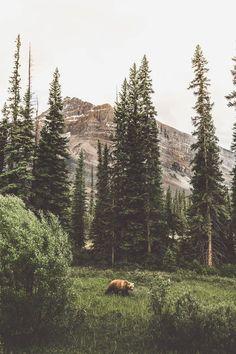 FOR EMMA, FOREVER AGO — lsleofskye: Banff National Park | chrispoops Tree Photography, Animal Photography, Landscape Photography, Camping Photography, Photography Backdrops, Photography Settings, Landscape Photos, Landscape Paintings, Forest Landscape
