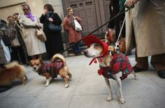 Dogs in costumes wait with their owners to be blessed outside San Anton Church in Madrid January 17, 2012. Hundreds of pet owners bring thei...