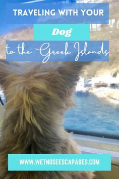 Wanna travel with the dog to the marvelous Greek Islands? It's easier than you think! Find out how to take your dog on a Greek Island ferry NOW. #greekislands #greekislandsvacation #greekislandsphotography #greekislandstovisit #greekislandsmap #greekislandssantorini #dogsingreece #traveleuropewithdog #travelingeuropewithdog #greekislandferryroutes #greekislandferrymap #santorini #paros #naxos #crete #mykonos #dogtravel #yorkshireterrier #travelingyorkie #flyingyorkie #ferrydog #dogtraveltips Greek Islands Map, Greek Island Ferries, Greek Islands Vacation, Greek Islands To Visit, Mykonos, Santorini, Great Places To Travel, Places In Europe, Dog Care Tips