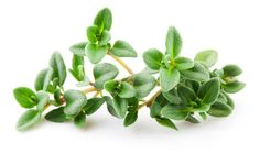Thyme leaves Study Finds Thyme Essential Oil Beats Ibuprofen for Pain Relief