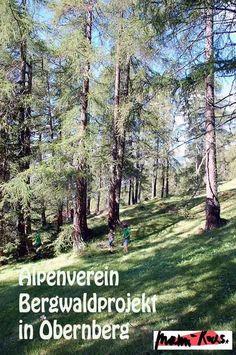 Mit dem Alpenverein Bergwaldprojekt in Obernberg • Mami rocks  #umweltschutz #bergwaldprojekt #alpenverein #umweltbaustellen  #nachhaltigleben #nachhaltigwerden #klimaschutz #alpen #wald Obernberg Am Brenner, Plants, Blog, Environmentalism, Traveling With Children, Hiking With Kids, Blogging, Plant, Planets