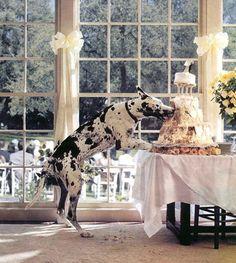 Así va a hacer Kira el día de la boda de mi hermana