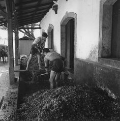 Grape harvest (Portugal) - photo by Artur Pastor Old Pictures, Old Photos, Vintage Photos, Foto Vintage, Sea Activities, Dental Art, Sunny Beach, Working People, My Heritage