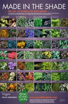 Great plants for all kinds of shade!  To date over 800 exceptional plants have been selected for gardeners living west of the Cascade Mountains from Eugene, Oregon, USA to Vancouver, British Columbia, Canada.
