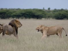 #luxury #Botswana #safari www.africauncovered.com/botswana-safari/