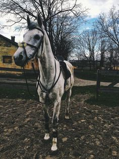 Hero wasn't the best today but we still completed a course even though he had a few shenanigans. looking forward to the show soon! Cute Horses, Pretty Horses, Horse Love, Beautiful Horses, Animals Beautiful, Horse Photos, Horse Pictures, Animals And Pets, Cute Animals
