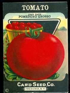 Reserved for Sharon  Antique Seed Packet Red Tomato by veraviola