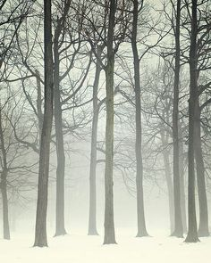 Fading trees by IrenaS
