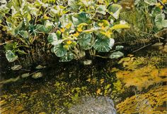 marsh marigolds overhanging jessie's stream x micheal zarowsky watercolour on arches paper private collection Marsh Marigold, Arches Paper, Watercolour, Paintings, Fine Art, Explore, Landscape, Plants, Collection