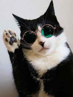 Looking for hippie cat names? Here is a collection of most popular hippie male/female cat names. Cute Funny Animals, Cute Baby Animals, Funny Cats, Cute Kittens, Cats And Kittens, Kitty Cats, Gatos Cool, Cat Sunglasses, Polarized Sunglasses
