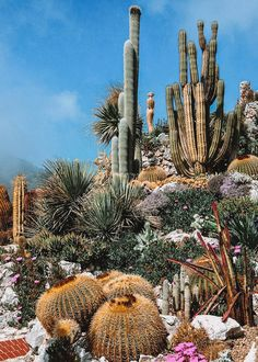 Top Reasons to Visit the South of France more on Earth Below Girls Cacti And Succulents, Cactus Plants, Dessert Landscaping, Garden Art, Garden Design, Desert Aesthetic, Forest Sunset, Plantas Bonsai, Ocean Wallpaper