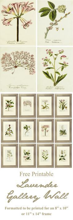 """21 Free Printables for a Lavender Gallery Wall with beautiful botanical prints. Images are formatted to be printed for an 8"""" x 10"""" or 11"""" x 14"""" frame. www.simplymadebyrebecca.wordpress.com"""