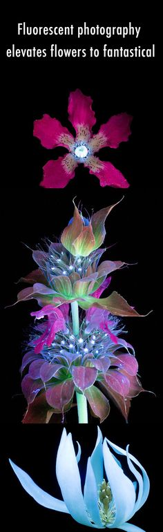 Fluorescent photography elevates flowers to fantastical