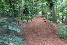A path through a shaded area at the Sydney Botanic Gardens. Simple but looks great.