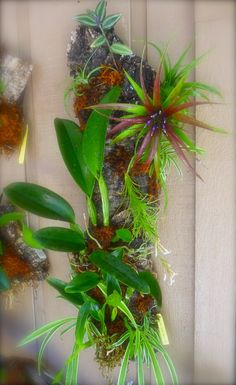 Gypsy Living Traveling In Style| Serafini Amelia| Natural Elements- Airplants & Orchids on a piece of Rustic Wood|  #orchids #tillandsia #airplants