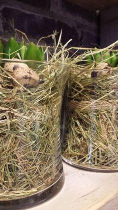 Simpele voorjaars decoratie: ..... Hyacinten in glaswerk met stro, eitjes en veertjes