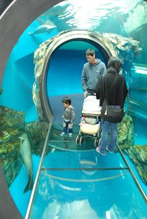 Zoo and Aquarium Design: 360 degree viewing tunnel at Spotted Seal exhibit ...