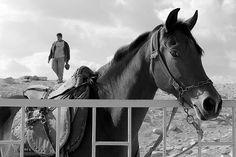 Horse-egypt