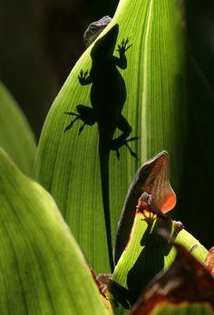 Lizard Habitat - Randy Heisch