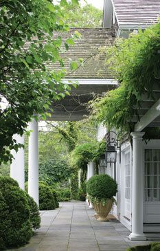 Wisteria hangs from a pergola and clouds of boxwood frame back terrace @ Chartotte Moss' Hamptons home.