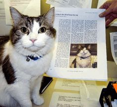 Oscar the cat helps old folks when they die.