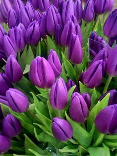 exotic flowers of pleasanton Beautiful Rose Flowers, Flowers Nature, Exotic Flowers, Amazing Flowers, My Flower, Pretty Flowers, Tulips Garden, Purple Garden, Planting Flowers