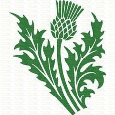 Scottish Thistle Sticker - Vinyl Cut Graphics UK, Signs and Decals