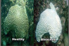 banda negra corales - Buscar con Google