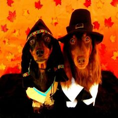 Thanksgiving Pilgrim And Indian Dachshunds Style1