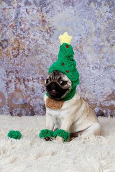 Christmas Pug! I love his face! I would also love to do this to bear for a Christmas card lol