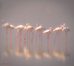 Photograph Dreamland by Ahmed Thabet on 500px