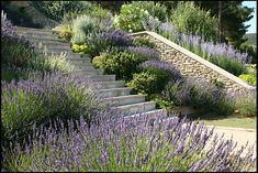Terraced Garden in Provence