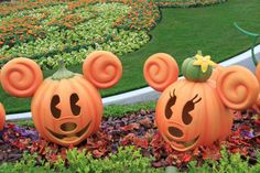 Minnie and Mickey Mouse Halloween pumpkins at Disney Disney World Halloween, Mickey Mouse Halloween, Disneyland Halloween, Mickey Minnie Mouse, Scary Halloween, Halloween Pumpkins, Fall Halloween, Halloween Crafts, Halloween Decorations