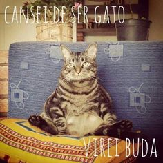 Cansei de ser gato Hello Kitty, Memes, Funny Cats, Haha, Humor, Dogs, Cute, Cards, Pictures