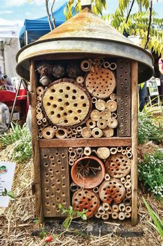 Native Bees in the permaculture garden by Megan Halcroft