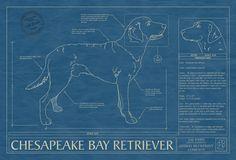 CHESAPEAKE BAY RETRIEVER1200x200.jpg