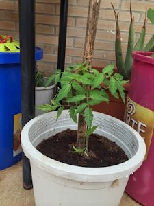 Evolución del huerto   Plantas Plantar, Vegetable Garden, Flower Pots, Friday, Friends, Photos