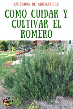 Organic Gardening How To Green Garden, Herb Garden, Vegetable Garden, Garden Plants, House Plants, Organic Gardening, Gardening Tips, Francis Hallé, Fruit Plants