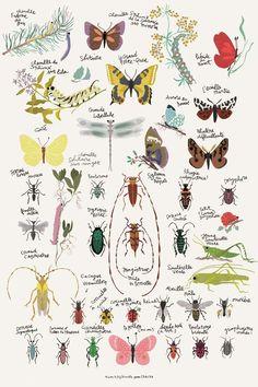 Tinou: Insekt- & sommerfugle plakat (40 x 60 cm) - MIDLERTIDIG UDSOLGT!