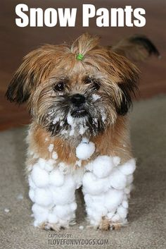This Dog was almost turned into a Giant Snowball after she played in the snow for 20 minutes