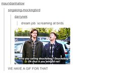"""""""Oh, shut it, you winged rat!"""" 