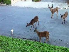 This is amazing behavior for deers. #Animals