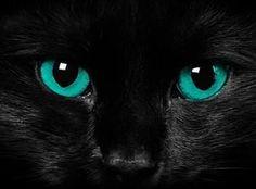 Black Cat, turquoise eyes