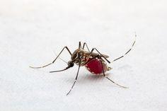 Komáři to absolutně nenávidí a zůstanou od vás desítky metrů daleko. Zbavte se jich bez použití chemie - BydlímeÚtulně.cz Photography Website, Insects, Chemistry