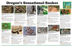 S-s-s-s-s-snakes! Oregon's sensational snakes, by the Oregon Department of Fish and Wildlife