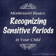 Montessori Basics - Recognizing Sensitive Periods in Your Children 15m+