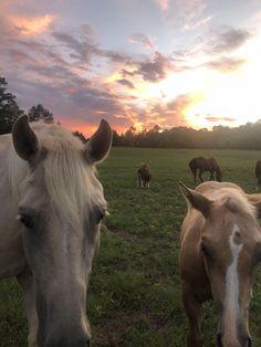 You got treats? Cute Horses, Pretty Horses, Horse Love, Beautiful Horse Pictures, Beautiful Horses, Animals Beautiful, Cute Baby Animals, Farm Animals, Animals And Pets