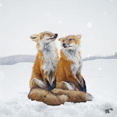simen johan digitally constructs an imagined animal kingdom Beautiful Creatures, Animals Beautiful, Cute Animals, Wild Animals, Fox In Snow, Malamute, Fennec, Fox Art, Pet Portraits
