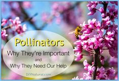 Pollination - Why It's Important and Why Pollinators Need Our Help – Pollination is how many plants reproduce. Since plants are immobile they need pollinators, and pollinators are in trouble from pesticides. Learn how to help!